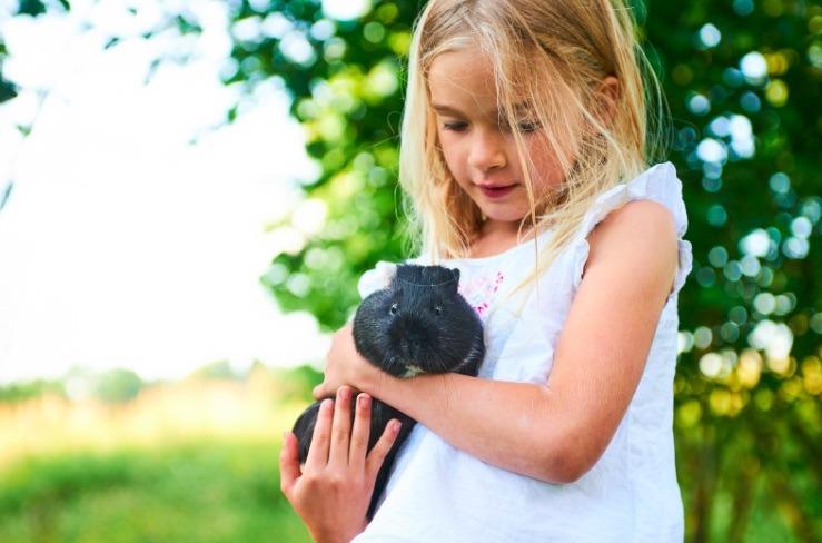 Como explicar a morte através da perda de um animal de estimação